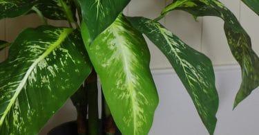 belle plante artificielle
